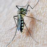 終結瘧疾的疫苗