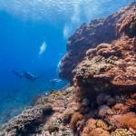 Google 街景前進台灣海底世界,不僅紀錄海洋之美更希望喚醒民眾對生態保育的重視