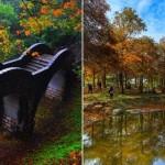 全台紅葉&落羽松18名所 親子野餐散步小旅行