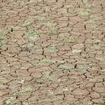 平衡全球暖化的兩難