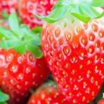 2016全台草莓季最新消息!這些地方成熟&開採囉