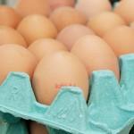 蛋蛋的悲哀