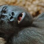 動物園動物如何學習照顧自己