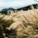 【懶人包】全台芒草私密景點 親子秋冬好去處
