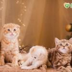 貓咪罹患腎臟病 選擇開罐即食營養品守護毛孩健康