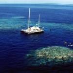 大堡礁,又一次的漂白危機