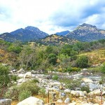 加州紅杉樹國家公園參見全世界最大的樹