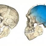 30萬年前的頭骨可以改寫人類起源的故事