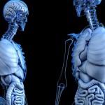 把身體器官捐獻給科學在美國變得越來越流行