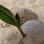 生活裡的植物生命週期