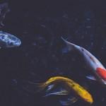魚也會憂鬱