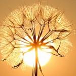 會有一些東西聞起來像陽光嗎?