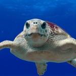 世界第一座認證的海龜醫院