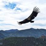 加州尖頂國家公園