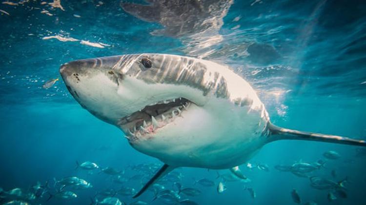 防鯊網危害海洋生物應淘汰