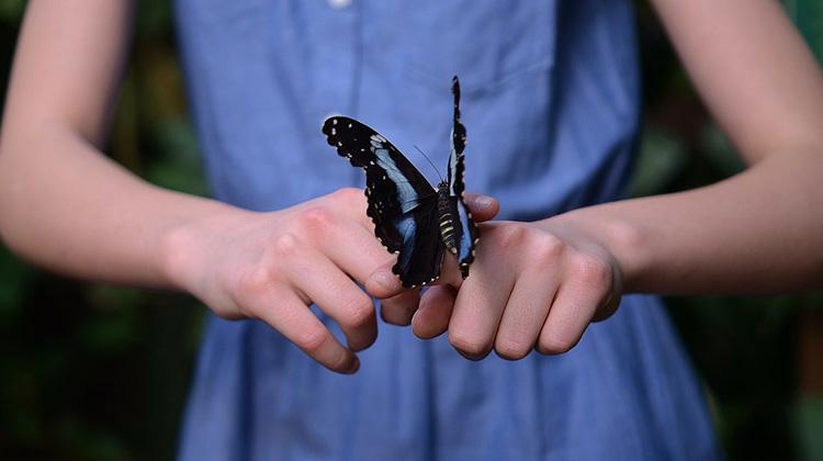 美國巨星安潔莉娜裘莉愛吃昆蟲!這家芬蘭百年烘培坊推出健康的「蟋蟀麵包」,你敢不敢吃?