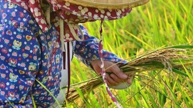 只剩「千歲團」爺奶在撐!台灣農地沒人可耕?