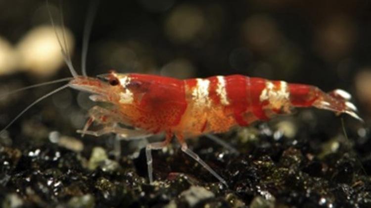 我們可以利用蝦殼來製作塑膠嗎?