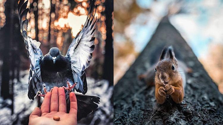 【美得像童話】超強野生動物攝影師,遇到他的動物都自動被催眠成模特兒了