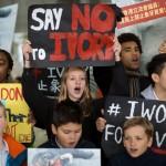 香港全面禁止象牙買賣