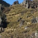 大陸自助旅行神農架篇(八)-板壁岩
