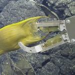 在深海火山口孵化寶寶的「水下母親」