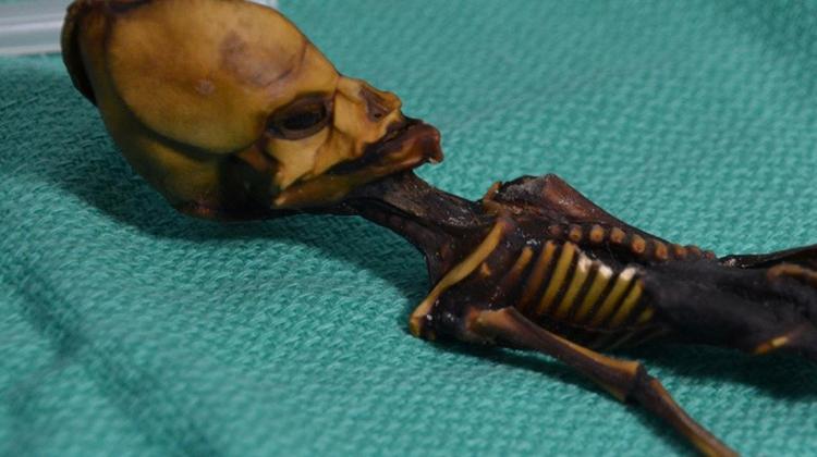 這個神奇的骨架原來不是外星人的