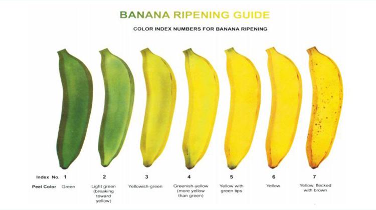 香蕉顏色決定風味與保健作用