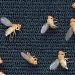 為什麼果蠅是太空中的第一種動物?