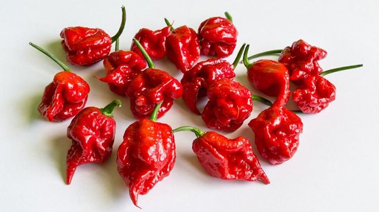世界上最辣的辣椒讓他頭痛欲裂