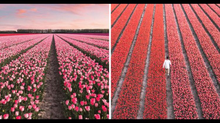 【又想飛出國了】一生一定要去外拍一次!荷蘭美到驚人 700 萬朵鬱金花同時綻放