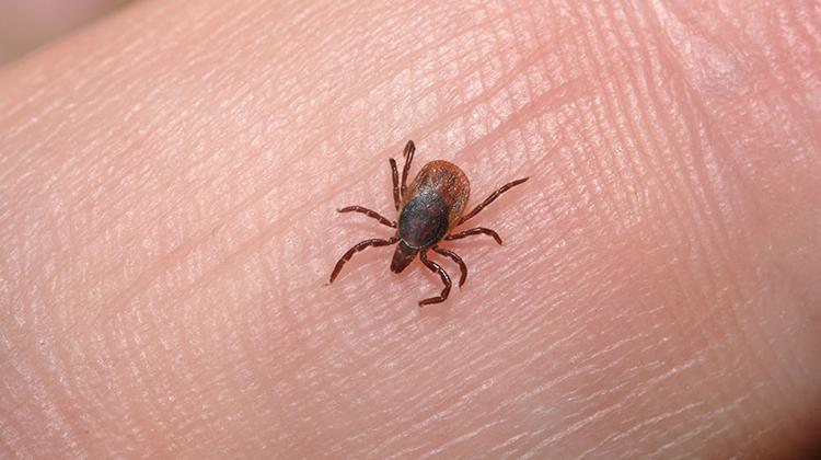 蜱傳染疾病正在上升。氣候變化是罪魁禍首嗎?