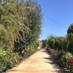 加州Fresno的地下花園