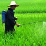 真菌殺蟲劑可能是未來的綠色解決方案