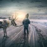 挪威北方的養鹿人捍衛傳統