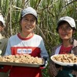 海拔最高的山地甘蔗》熟女之糖 傳唱鄒族的堅毅之歌