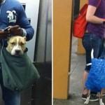 紐約地鐵的寵物們