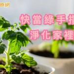PM2.5 好可怕! 快種植物清靜空氣保健康