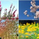 2019全台花季大爆發,北中南7大精采花季懶人包,還有贈品免費拿