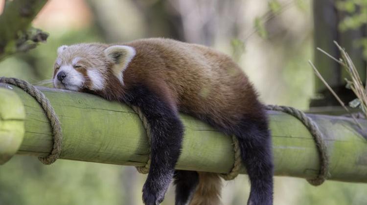 動物不睡覺能生存嗎?