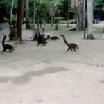 動物影片倒帶播放,南美浣熊變身長頸龍