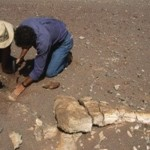 地球歷史上最嚴重的滅絕是什麼?
