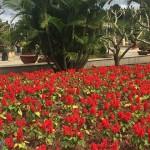 越南縱遊(十二) 大叻花園