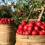 蘋果整顆連皮帶吃有益健康
