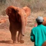 影響擴及非洲南部經濟:禁止象牙買賣「斷財路」,非洲多國揚言退出保護公約