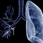 肺部也是脂肪儲存所
