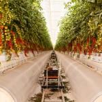 沙漠中的蔬果豐收
