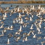 自1970年以來,北美已損失近30億隻鳥