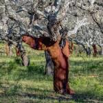 真的有軟木危機嗎?
