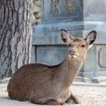 疫情新現象:野生動物在封鎖城市逛大街